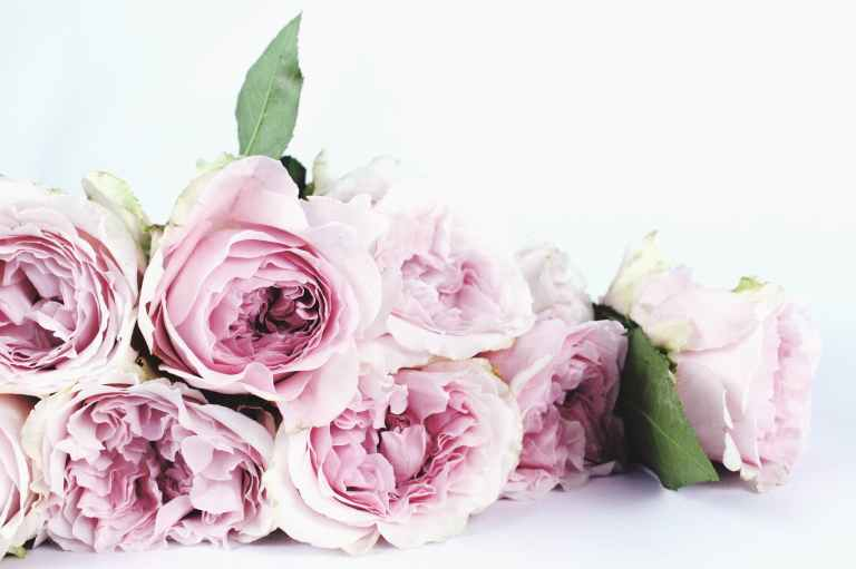 Tips and Tricks on how to keep Fresh Flowers alive longer – First ...